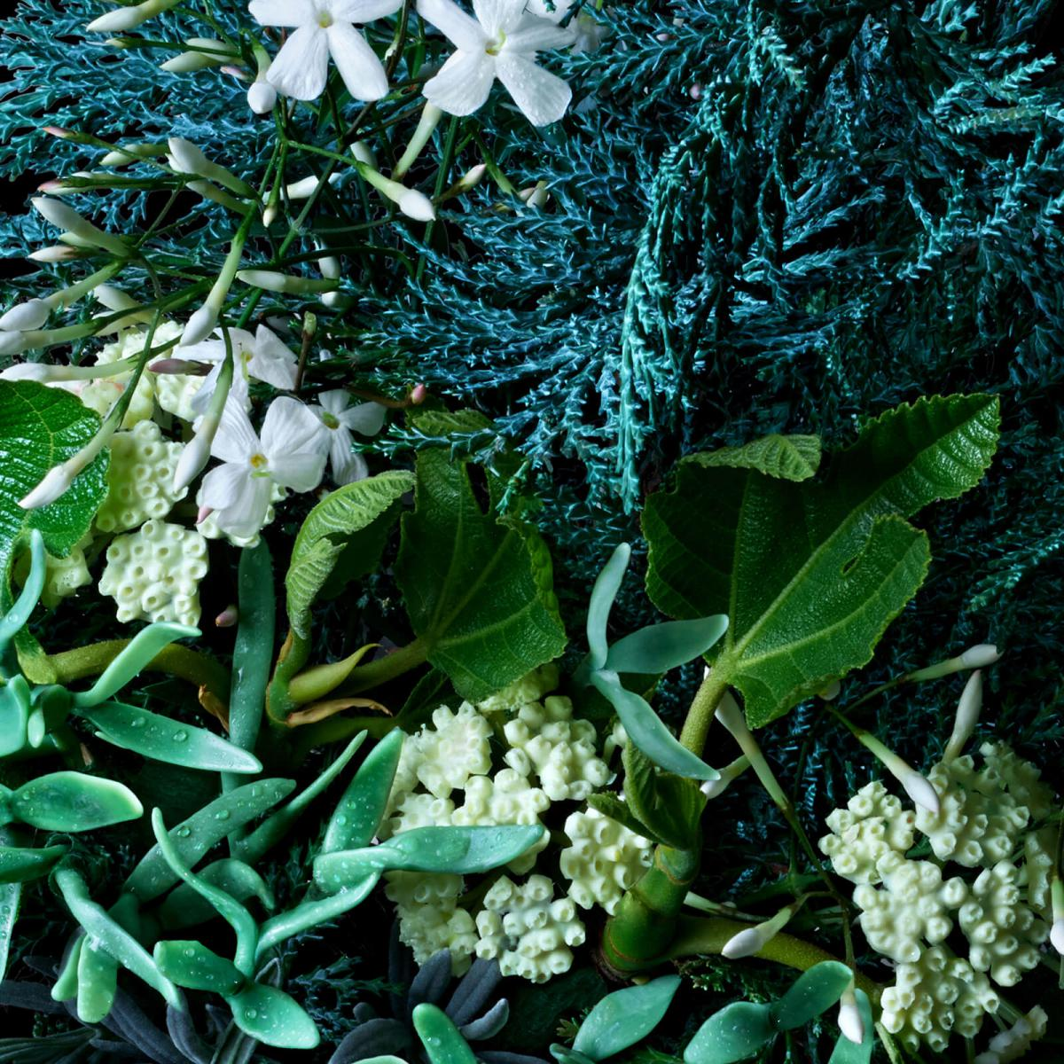 COFFRET FRAGRANCE COASTAL CYPRESS & SEA FENNEL